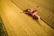 Wheat Harvest Begins Amidst Hot Summer