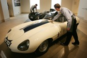 Jaguars Worth Over 10 Million To Be Auctioned