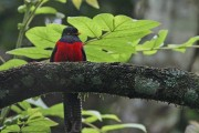 Bird in Congo Rain Forest